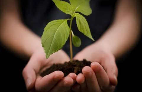 Plant A Tree & Help The Environment