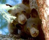 Bear Photos