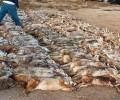 UPDATE:  WILDLIFE KILLING CONTEST PETITION