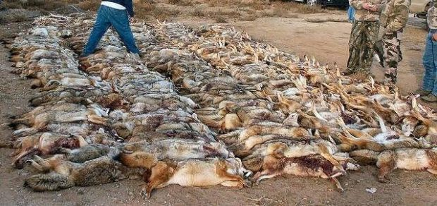 UPDATE:  WILDLIFE KILLING CONTEST PETITION
