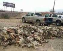 Nevada Wildlife Killing Contests