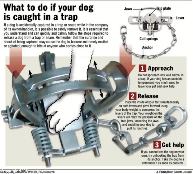 What to do if your animal is caught in a trap!!