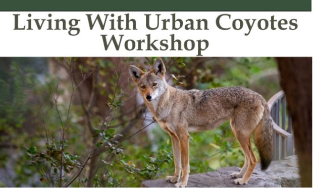 Living With Urban Coyotes Workshop