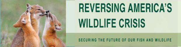 Reversing America's Wildlife Crisis